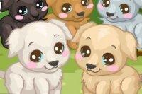Labrador Pflege