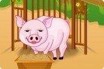 Schweinchen versorgen
